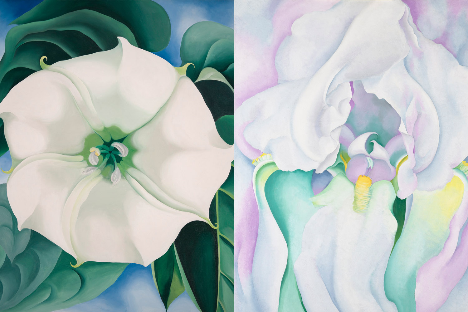 Why georgia okeeffe is the mother of american modernism sleek mag jimson weed and white iris mightylinksfo